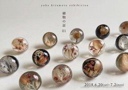 yuka kitamoto個展「植物の証 01」