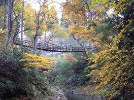 【紅葉・見ごろ】かずら橋周辺