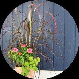 植物アレンジレッスン 「母の日の寄せ植え」