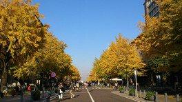 日本大通りの紅葉