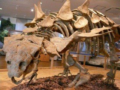 タイムスリップ!化石発掘調査隊