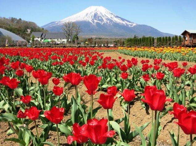 春の息吹 Spring Festival