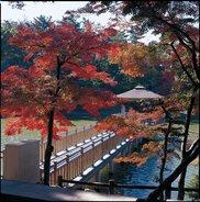 【紅葉・見ごろ】東公園