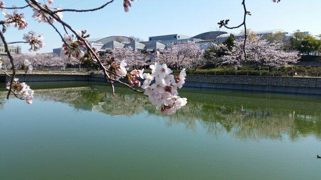 泉の森 桜 week 2019