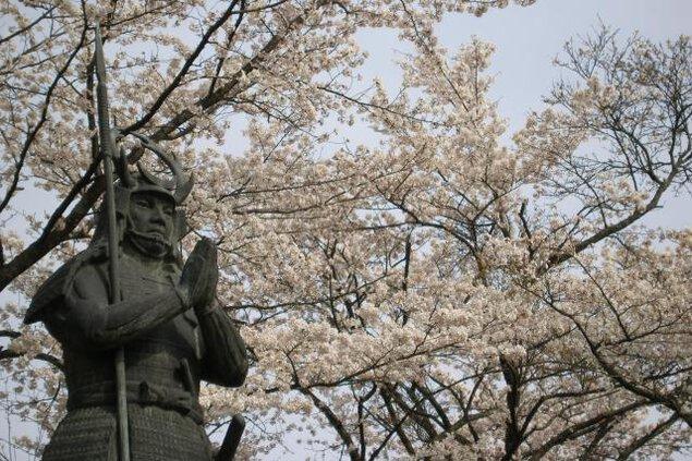 【桜・見ごろ】太鼓壇公園