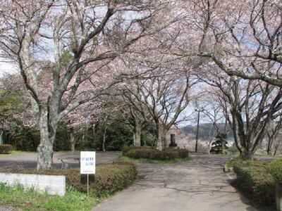 宇留野公園の桜