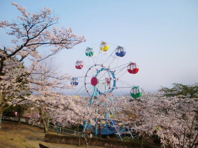 【桜・見ごろ】かみね公園