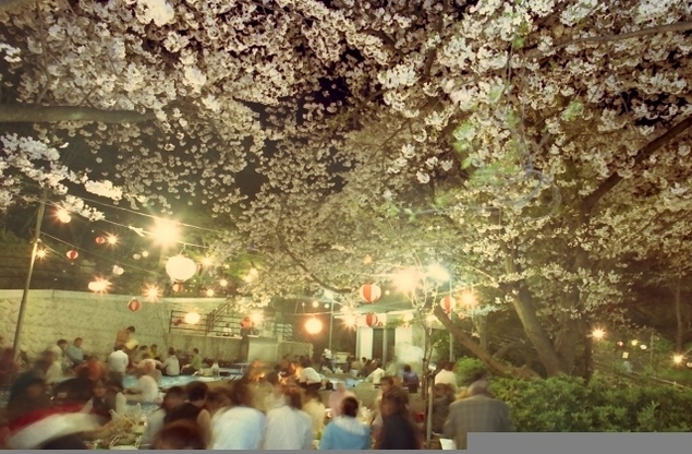 【桜・見ごろ】ウエノ公園