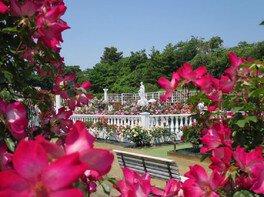 生田緑地「ばら苑」春の一般開放