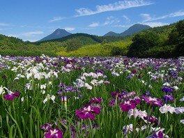 神楽女湖花しょうぶ観賞会