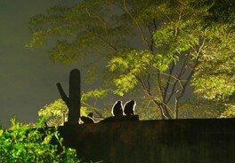 Night Zoo 2018