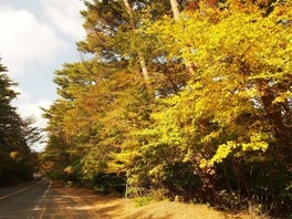 【紅葉・見ごろ】県道1号線