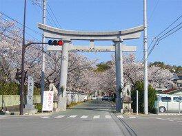 【桜・見ごろ】八王子宮