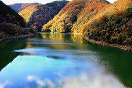 宇治川ラインの紅葉
