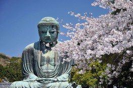 鎌倉大仏殿高徳院の桜