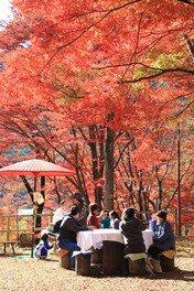 笹戸公園の紅葉