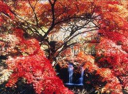 鐘山の滝の紅葉