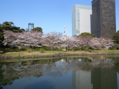 【臨時休園】旧芝離宮恩賜庭園の桜
