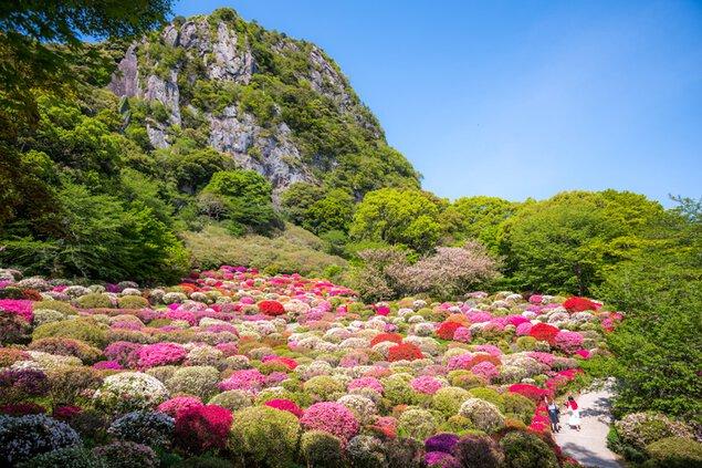 花まつり - つつじ、大藤、春もみじ