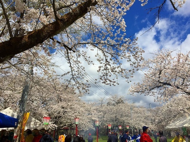 楯山公園桜まつり <中止となりました>