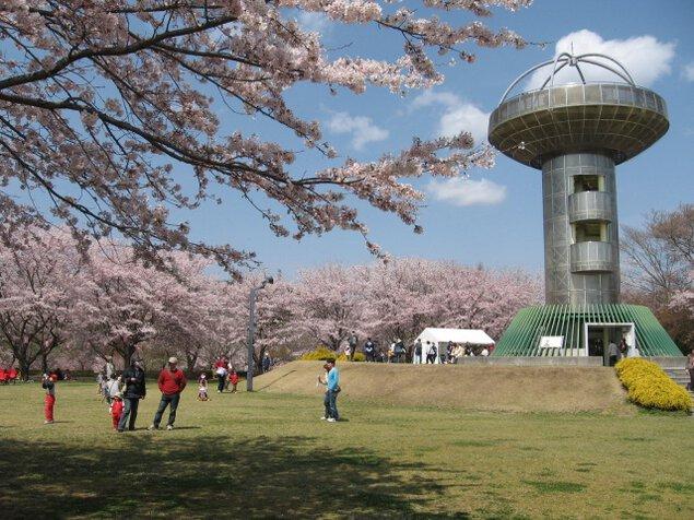 【桜・見ごろ】十王パノラマ公園
