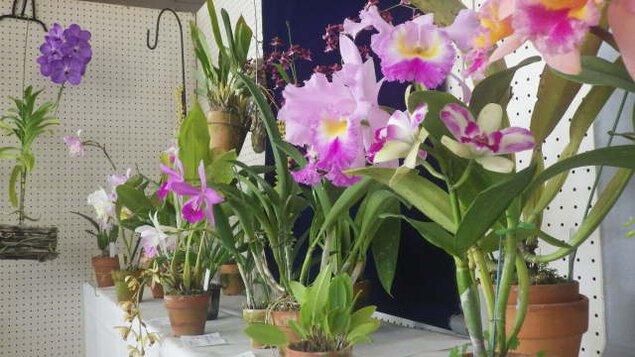 和歌山県緑花センター 春の洋ラン展