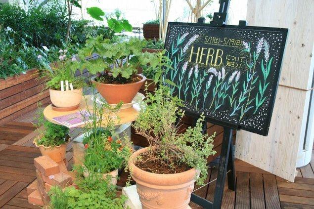 花と緑の展示~ハーブについて~