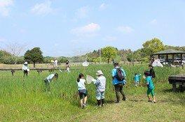 トンボ池で見つけよう! 夏の生き物観察会