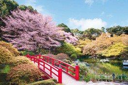 ホテルニューオータニ 日本庭園の桜