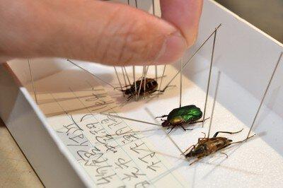 自然解説員が教える!昆虫標本教室