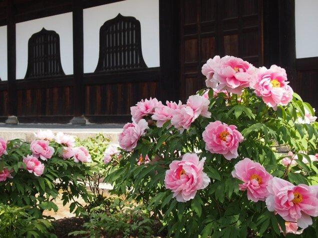 巨大な鐘の音が響く知恩院と牡丹咲く建仁寺、東山の裏道巡り