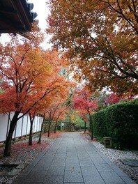 小倉城庭園の紅葉