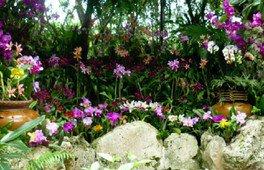 さまざまな種類のランの花が楽しめる