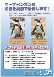 ケープペンギンの名前投票!