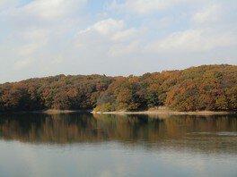 狭山湖(山口貯水池 ダム・県立狭山自然公園)の紅葉