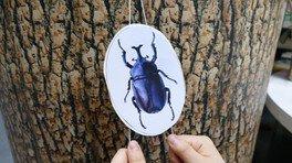 る・く・るワークショップ「のぼる昆虫おもちゃをつくろう!」