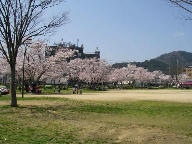 【桜・見ごろ】夢公園