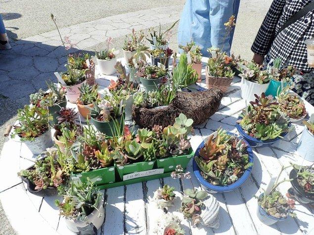 淡路島国営明石海峡公園 多肉植物の寄せ植え体験<中止となりました>