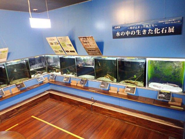 企画展「~時が止まった魚たち~ 水の中の生きた化石展」