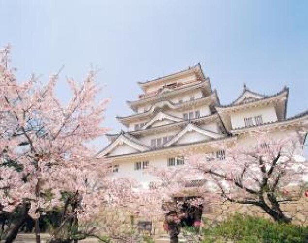 【桜・見ごろ】福山城公園