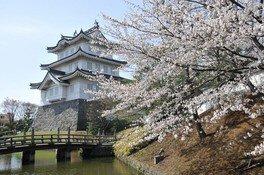 忍城址の桜