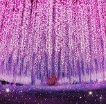 あしかがフラワーパーク「光の花の庭」