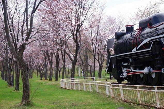 【桜・見ごろ】桜山公園の約800本の桜