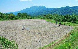 米作り体験 ~田植えver~