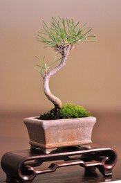 国営昭和記念公園 盆栽教室「ミニ盆栽づくり」
