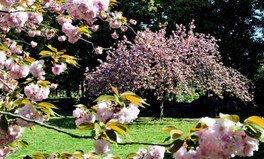 【臨時休園】清澄庭園の桜