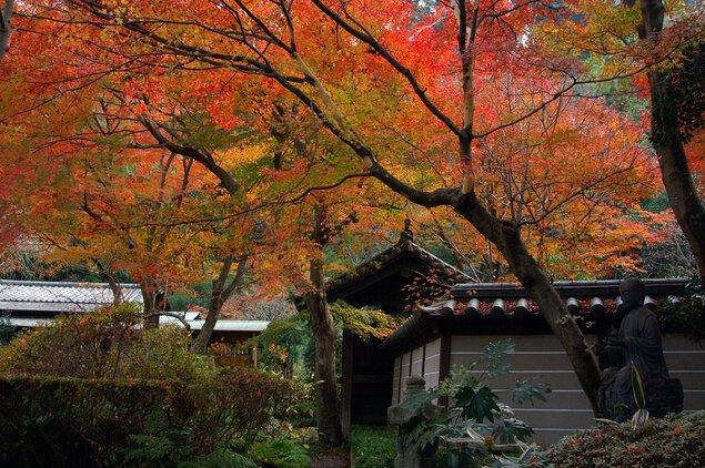 天園ハイキングコース周辺(瑞泉寺、覚園寺)の紅葉