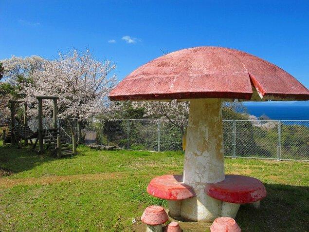 【桜・見ごろ】権田公園