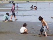 日川浜海水浴場の潮干狩り