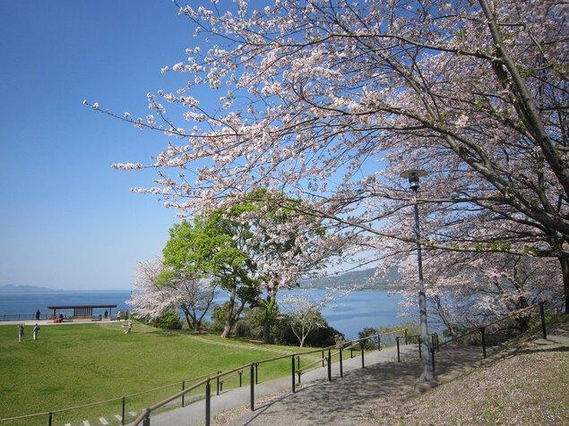 湯の児チェリーラインの桜